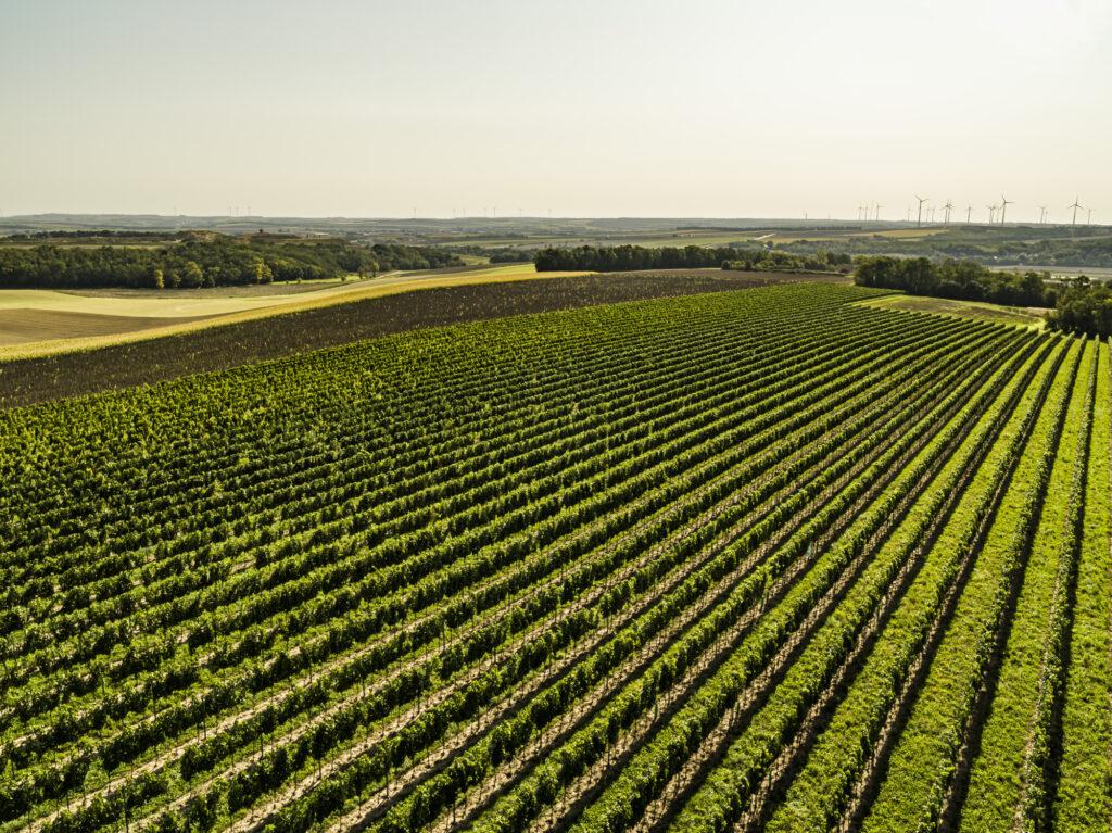 Blick über die Weingärten Richtung Mistelbach