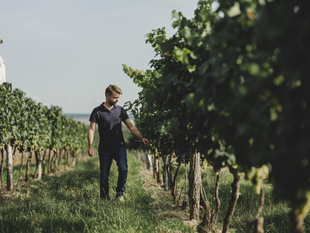 Alexander Waberer im Weingarten