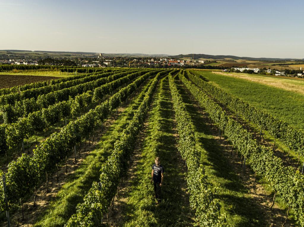 Blick über die Weingärten von Mistelbach