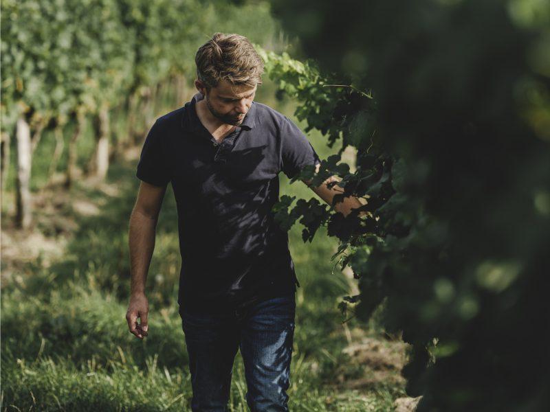 Alexander Waberer dünnt im Weingarten aus